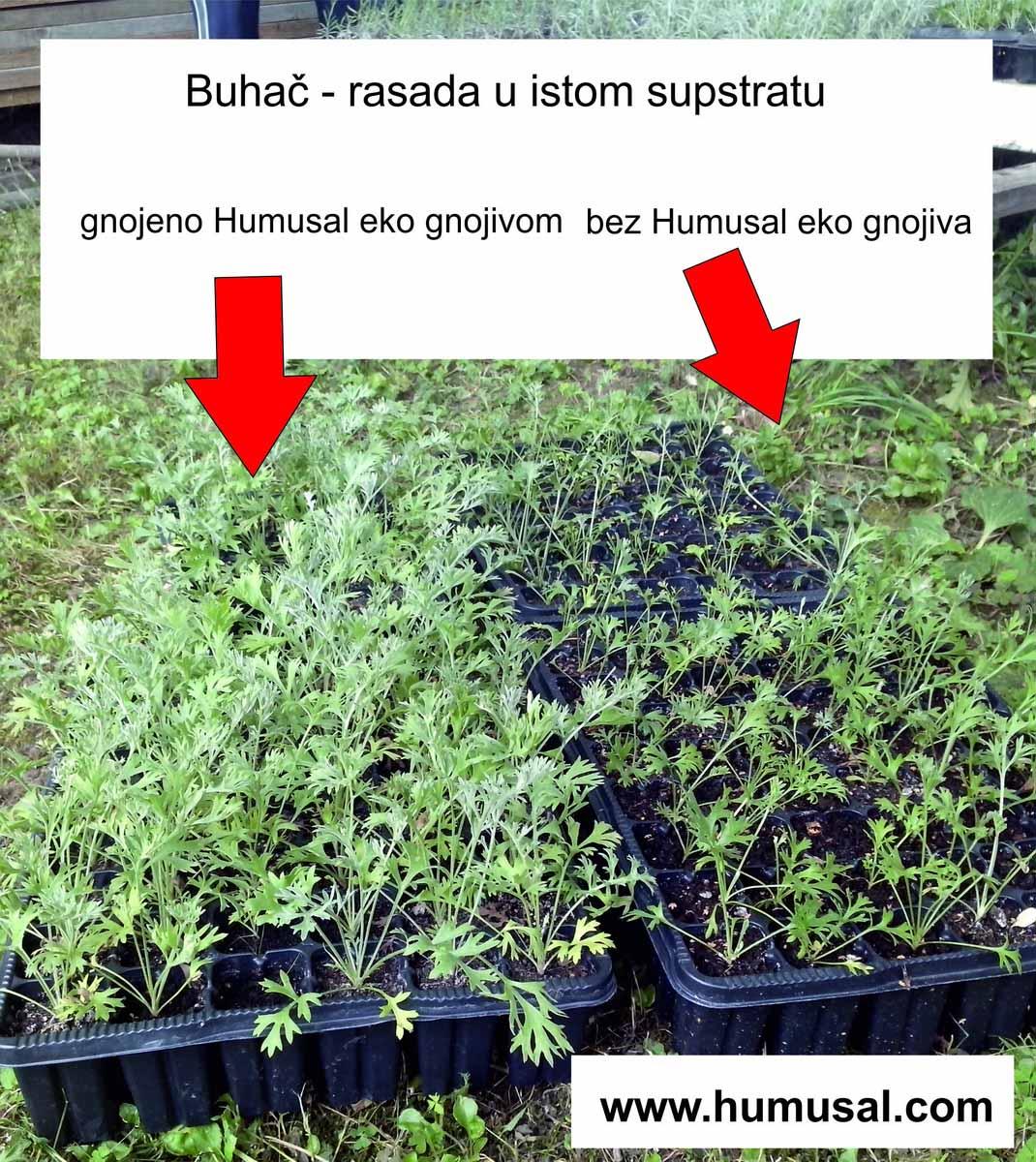 IMG_20140614_152349 - buhac eko gnojivo