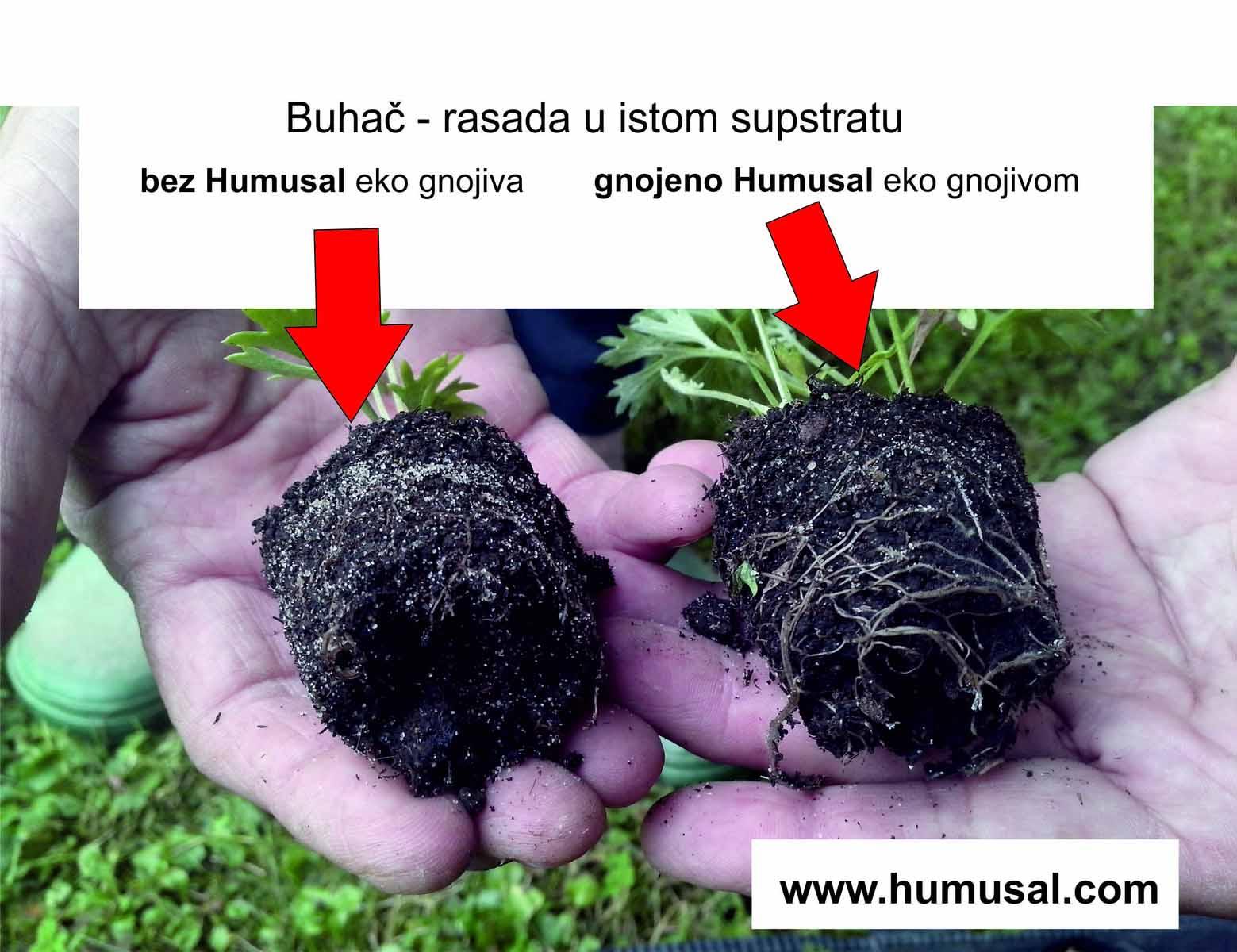 IMG_20140614_152653 - buhac eko gnojivo